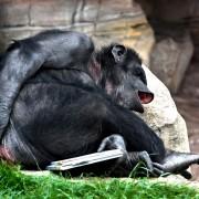monkey-825641_960_720