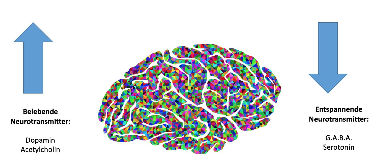 Vereinfachte Einteilung der vier relevantesten Neurotransmitter. Quelle: Eigene Darstellung.