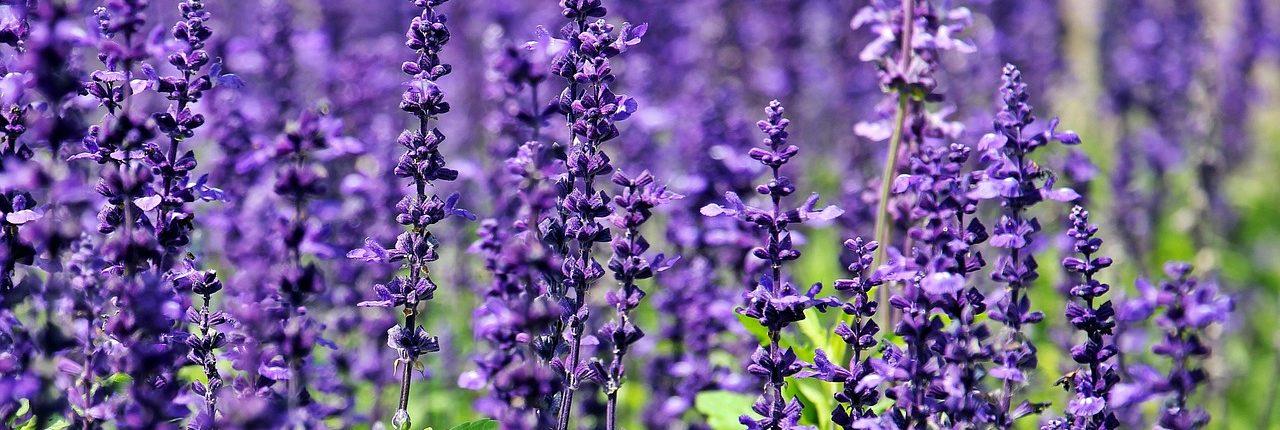 flowers-1507499_1280
