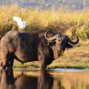 botswana-1652945_1280