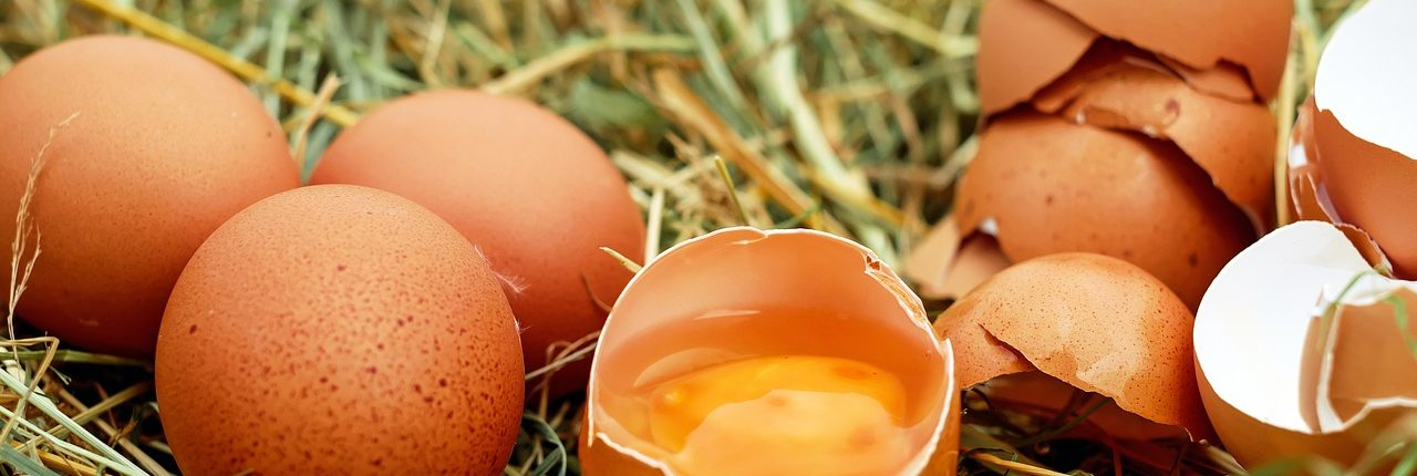 egg-1510449_1280