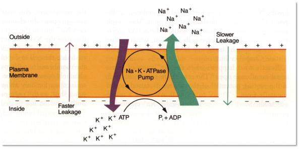Na & KA Pumpe