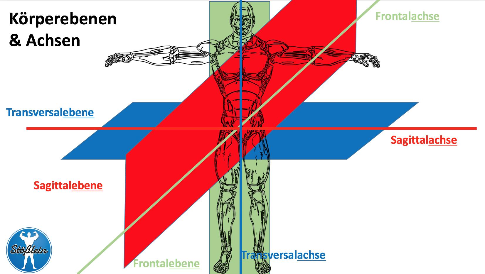 Frontalebene Archive - Bernd Stößlein Personal-Training