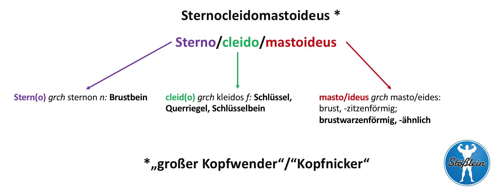 Lateinisch-griechischer Wortschatz in der Medizin